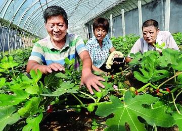 雪野旅游区:农旅融合 助农增收