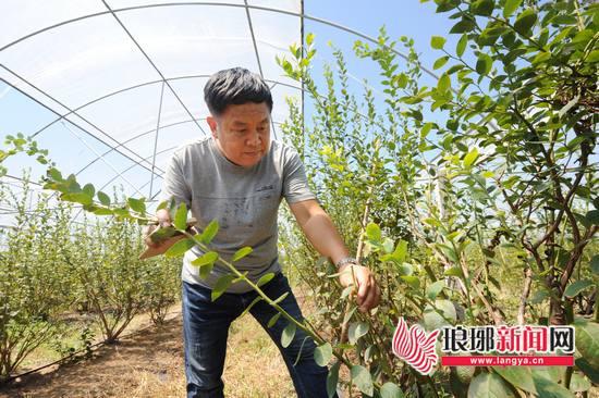 青岛大学派驻临沂大兴镇第一书记:发展特色产业