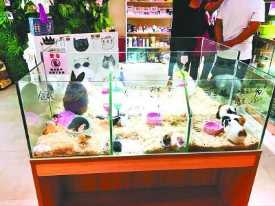 谢绝宠物的商场却开起萌宠店 相关部门:并不违规