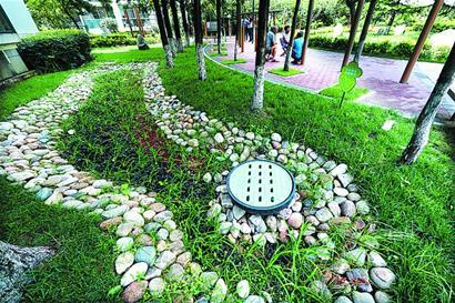 """打造雨水花园 青岛这个小区成为全省节水""""标兵"""""""