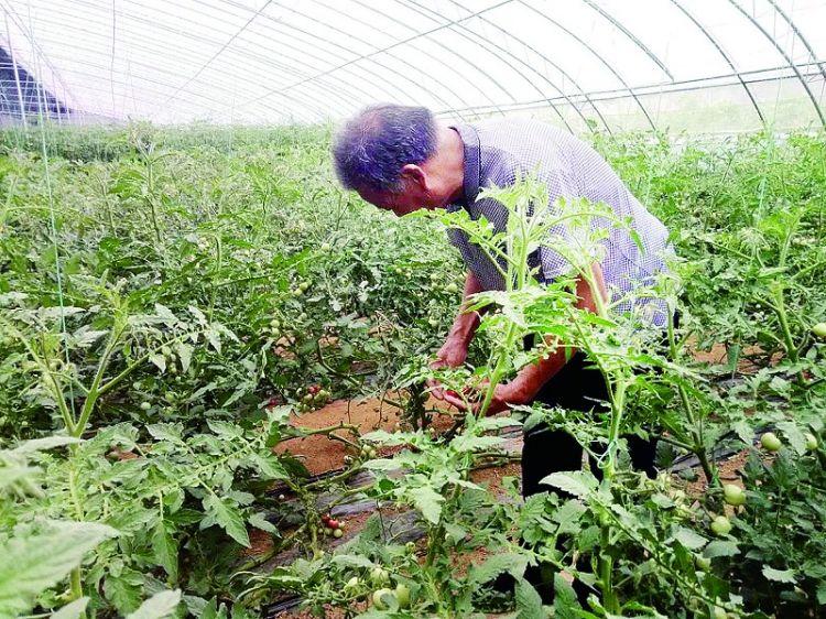 雪野旅游区茶业口镇:村民家门口就有钱挣