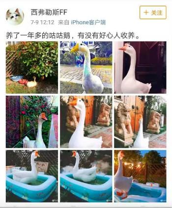 weixintupian_20180813102610.jpg