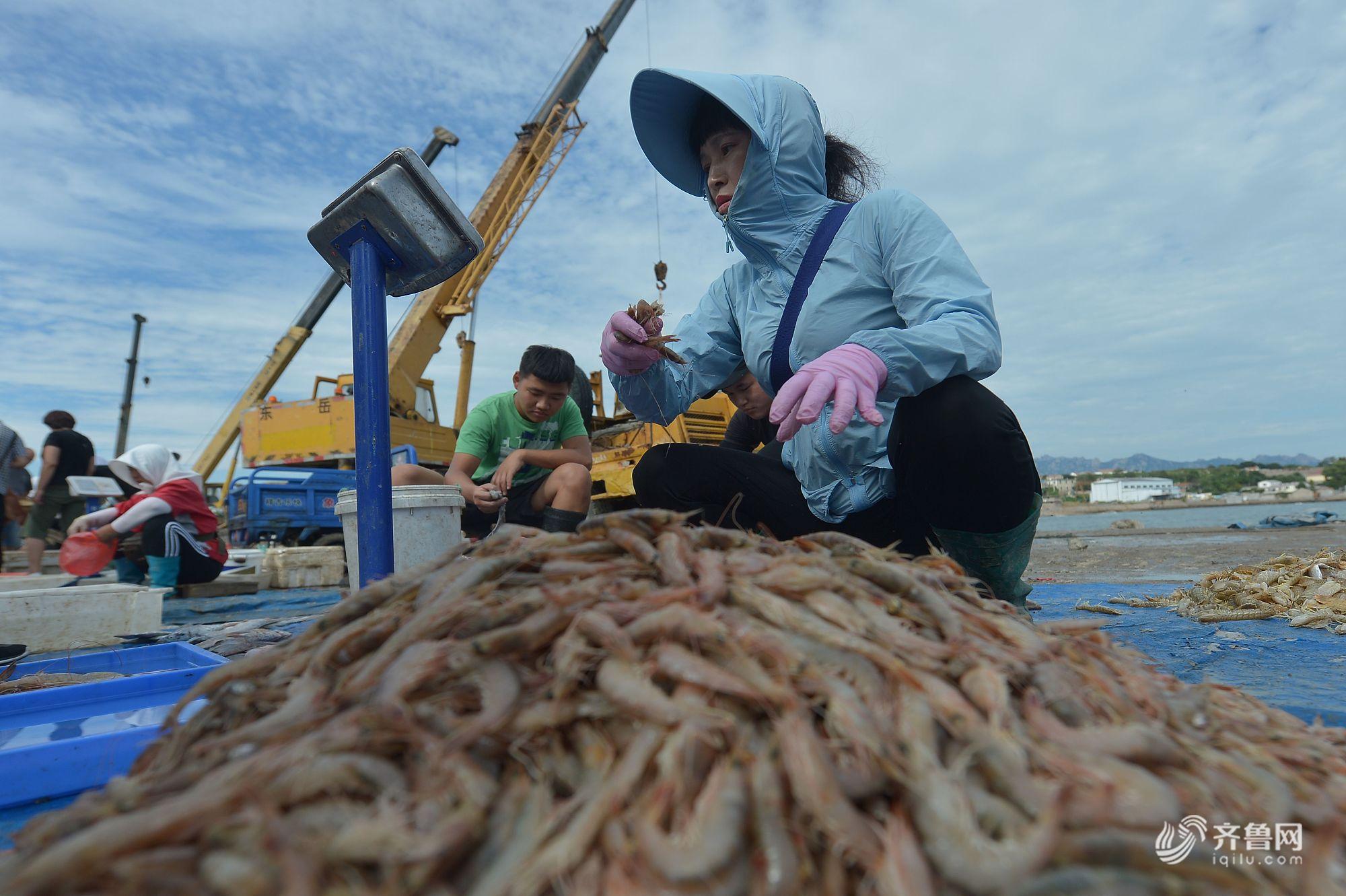 晒·秋 | 秋捕正当时 青岛海鲜市场热销鱼虾贝类海产