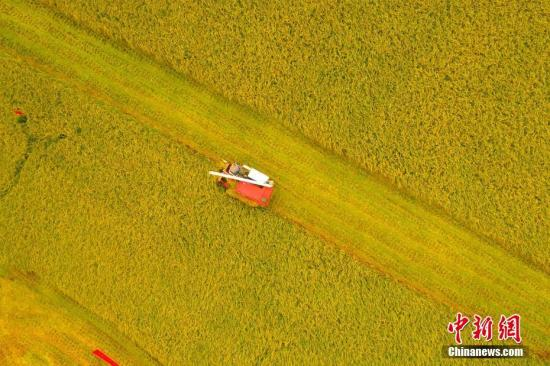 九部门:做好秋粮收购 避免发生大范围农民卖粮难