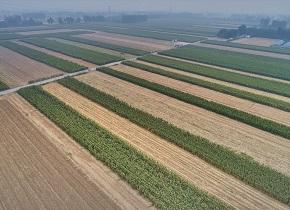 晒·秋 |邹平进入收获期  数亩玉米展现丰收之景