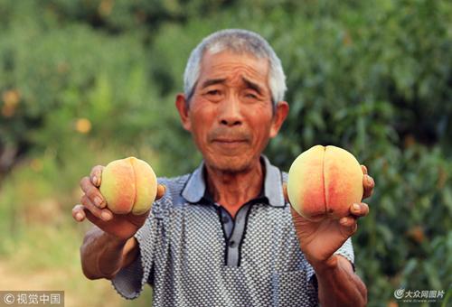 邹城七旬老人独居山坡种晚桃