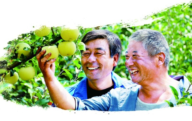 丰收的果实满枝头