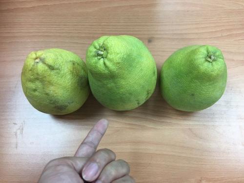 台湾中秋送礼有禁忌 上班族最不想收文旦柚