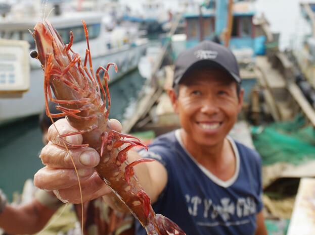 青岛秋捕喜人 收获罕见大竹节虾