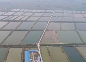 东明黄河滩区农民自述丰收故事:黄河滩上鲤鱼肥