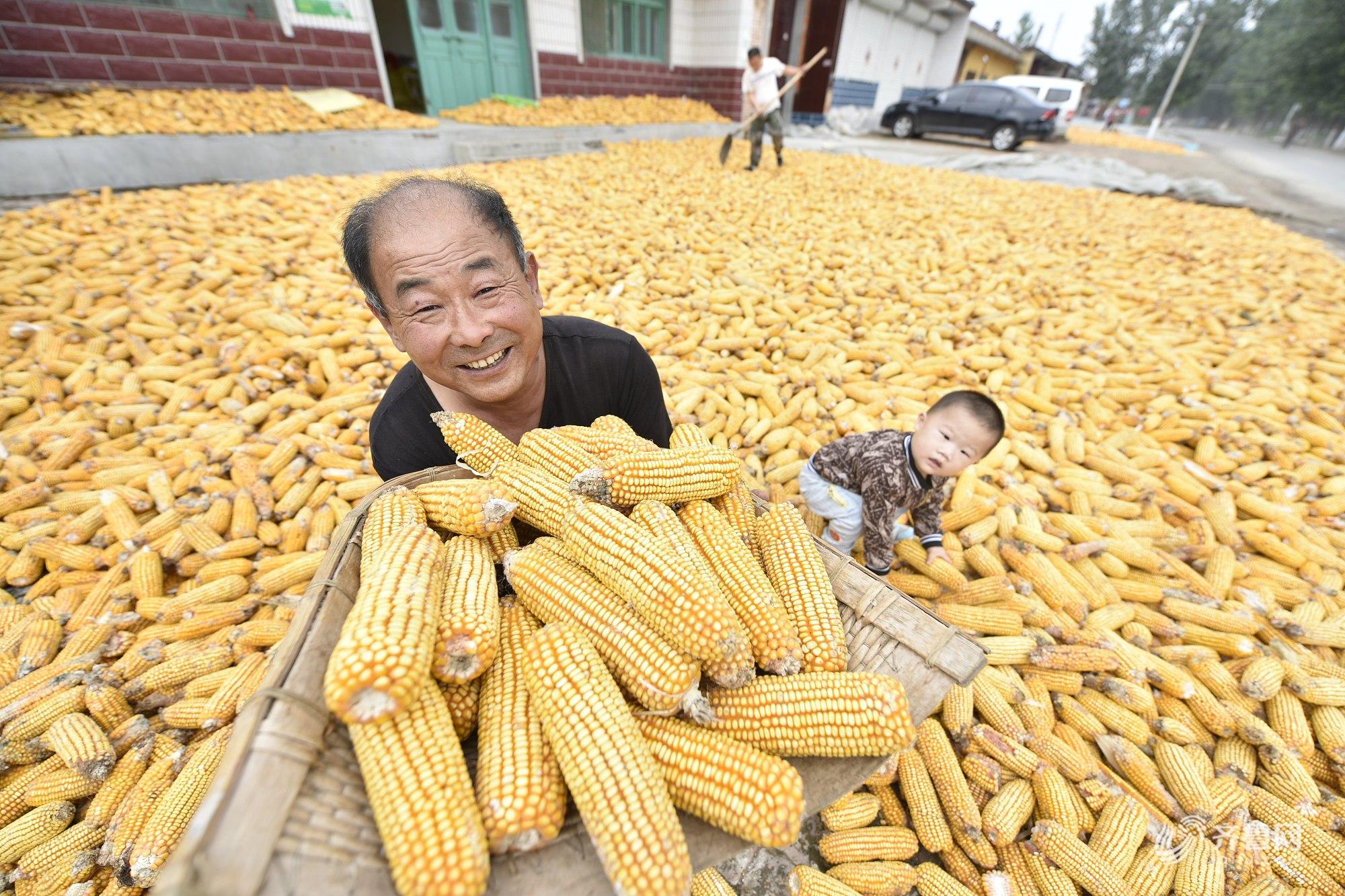 晒·秋 | 聊城农民金秋收获忙 玉米花生大枣相继丰收