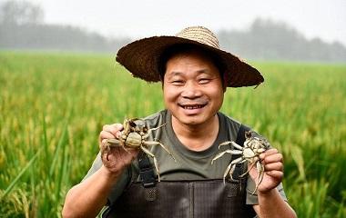 晒·秋|一地双收 台儿庄稻田蟹喜迎丰年