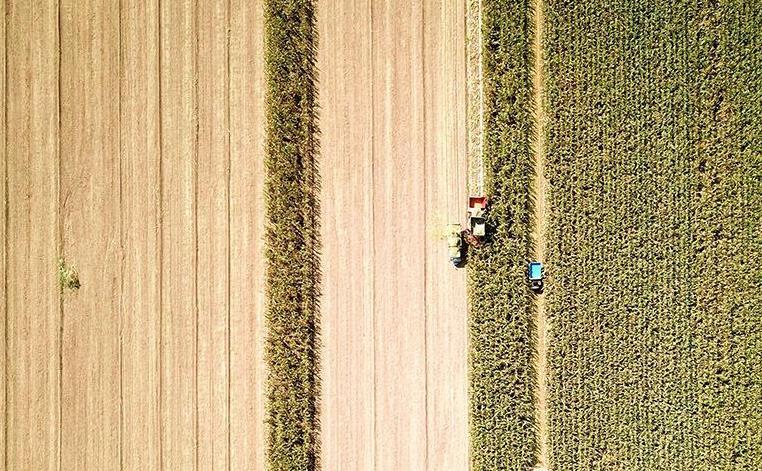 聊城:田间玉米黄 秋收正当时