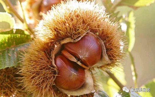秋季滋补吃栗子!板栗最馋人的多种吃法都在这里了