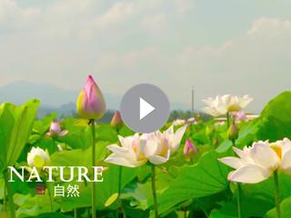 运河明珠·生态枣庄