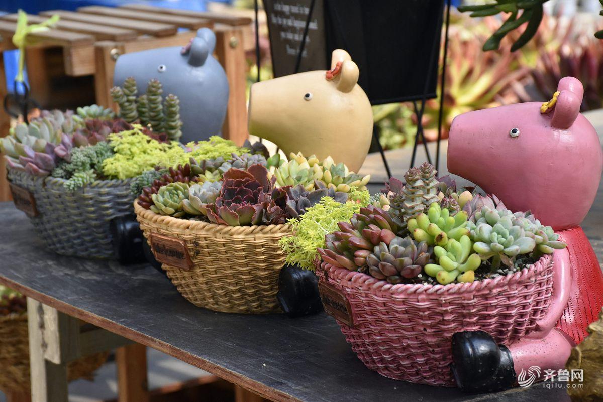 """山东潍坊:""""小猪佩奇""""多肉植物亮相花博会 吸引众多市民参观"""