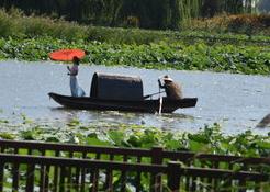 """高青天鹅湖温泉慢城开园,市民快来享受""""慢生活"""""""