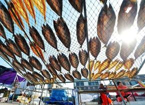 青岛渔村晒秋收获季 数不尽的海鱼成独特风景线