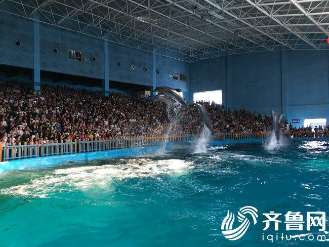 海洋极地世界海豚表演