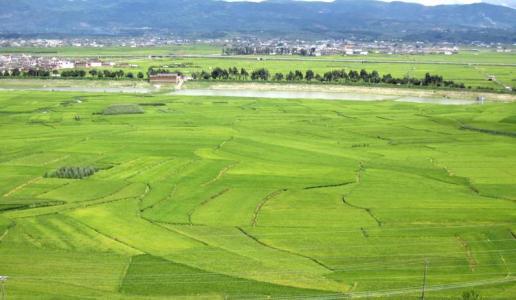 村霸除了 三十里铺镇追回1050亩被侵占集体土地