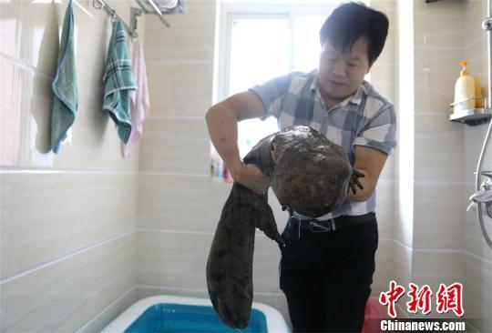15公斤大鲵现身湖北竹山县堵河水域 市民将其放生