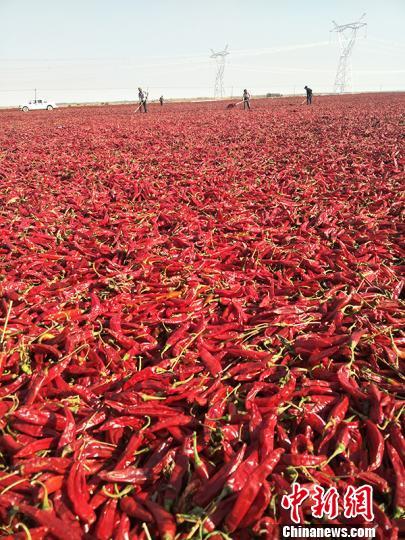 """新疆兵团农场""""三高""""地区打造""""三色农业""""经济区助农增收"""