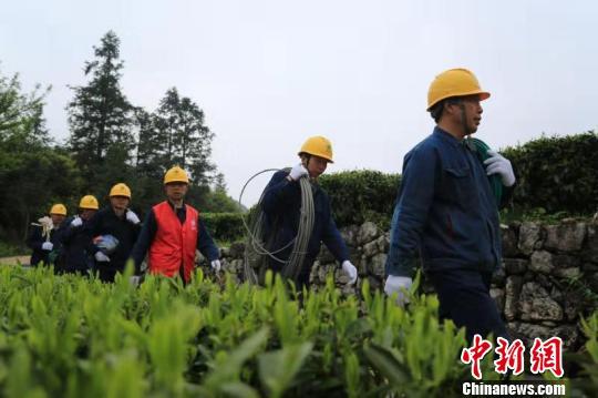 """充足电能点亮""""中国黑茶之乡""""产业振兴之光"""