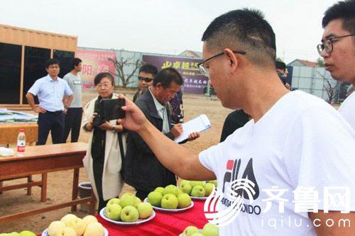 图为梨王争霸赛现场记者用手机拍摄现场利用联通网络现场上传图片和视频