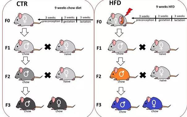 就问你怕不怕,新研究发现肥胖可以传三代!