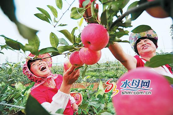 栖霞苹果艺术节开幕 栖霞被授予世界苹果之城