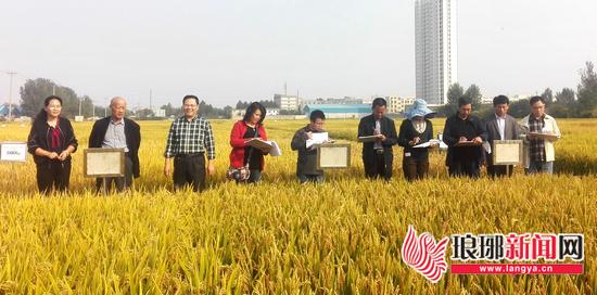 临沂种子工作者不断创新 水稻新品种试验获新成效