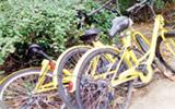 使用共享单车,你的行为文明吗?