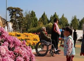 泰山天颐湖迎来赏菊最佳季节 7米高菊花塔成焦点