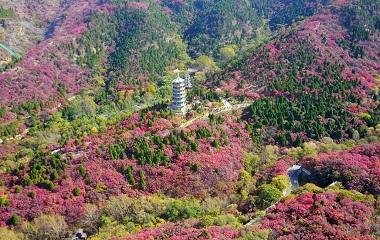 济南红叶谷进入最佳观赏期 满山红色热情如火