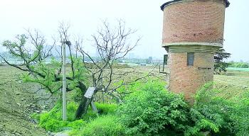 济南数百年古槐树被渣土山包围,经反映终被保护起来