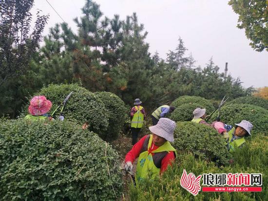 兰山区推进园林绿化工作 补种各类绿植6550m2