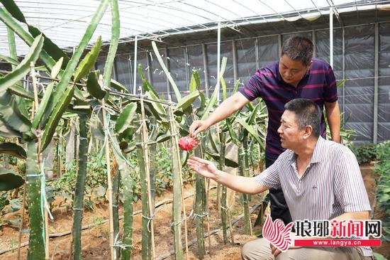 青岛派驻临沂兰陵第一书记:共建安居乐业新农村