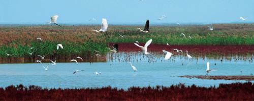 国际湿地城市东营首批入选