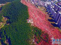 半山红叶半山绿 济南楔子山秋景如画