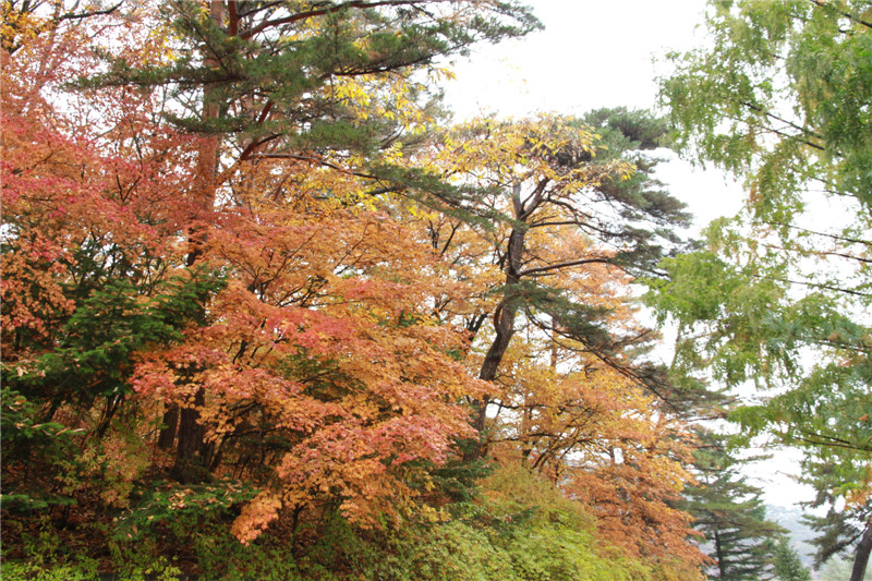 2018年金秋时节,我们跟团到朝鲜旅游,先后去了妙香山、开城、板门店、平壤等地,所到之处秋意渐浓,随手用相机手机记录下了这些秋色景致。