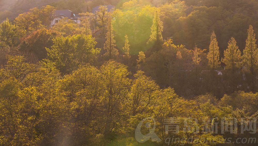 金色山谷。