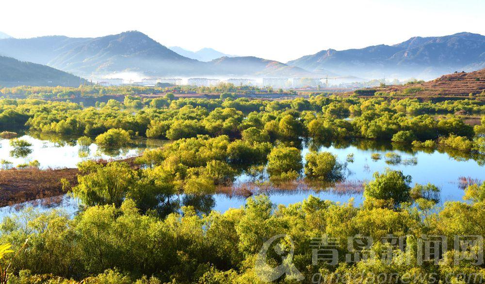 崂山水库,深秋的水上森林。