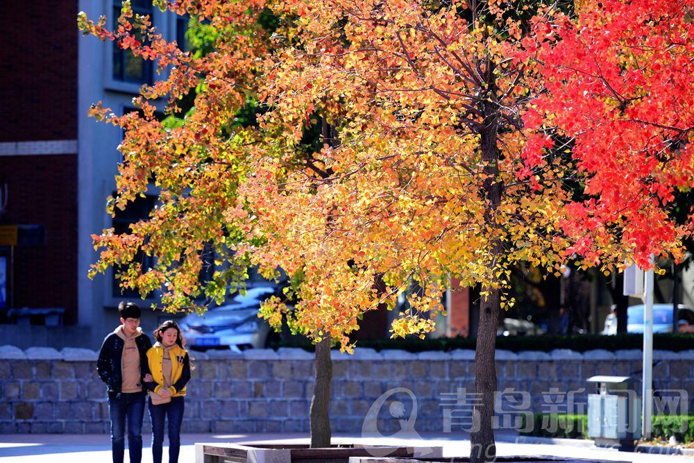 山科大,校园一角。