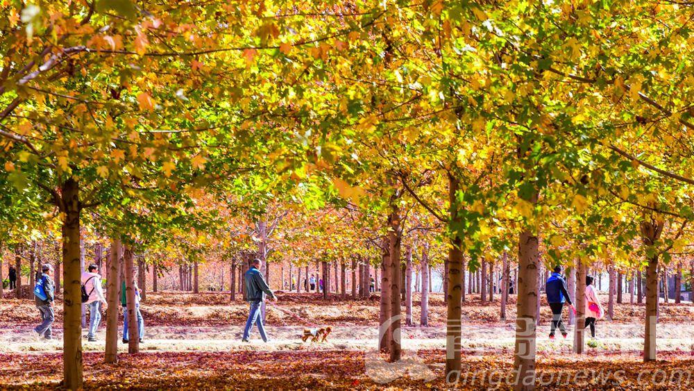 秋天是彩色的。