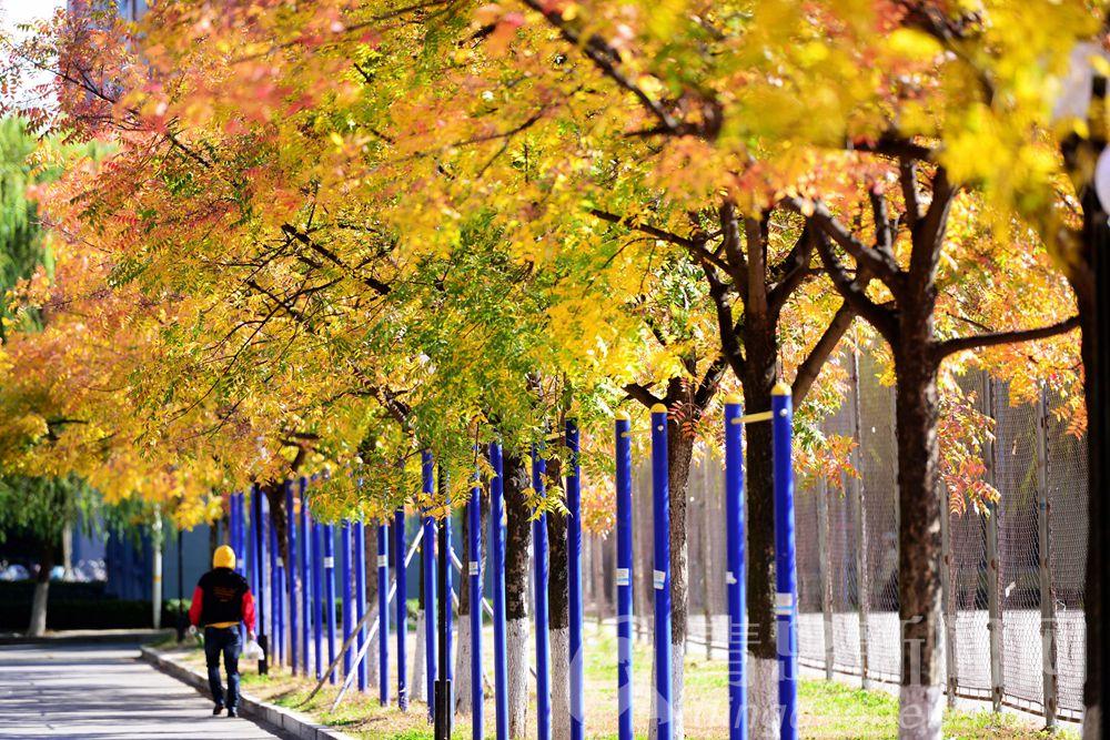 走在秋天里。