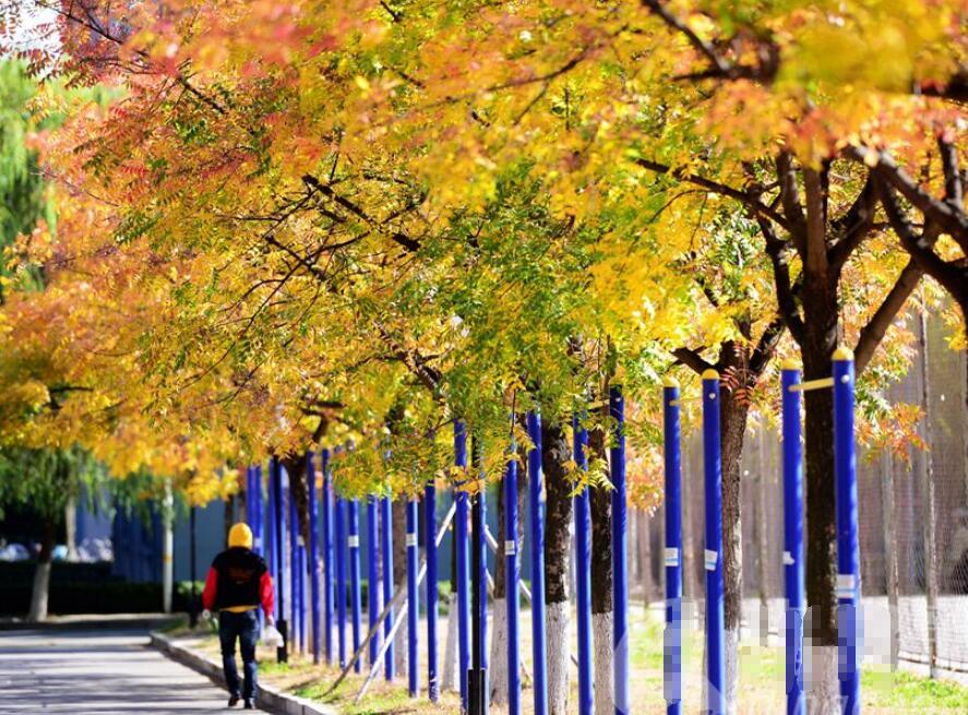 高清:青岛版的爱在深秋 邀您一起开启这幅山水美卷
