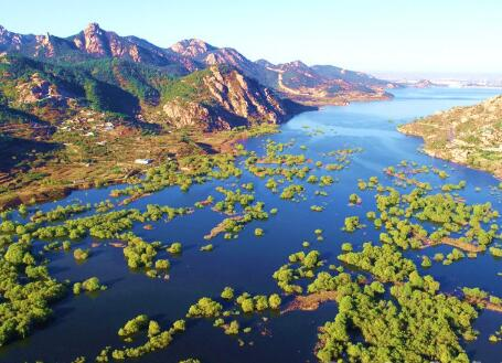 高清:青岛郊外有一片水上森林 深秋时节悄然呈现