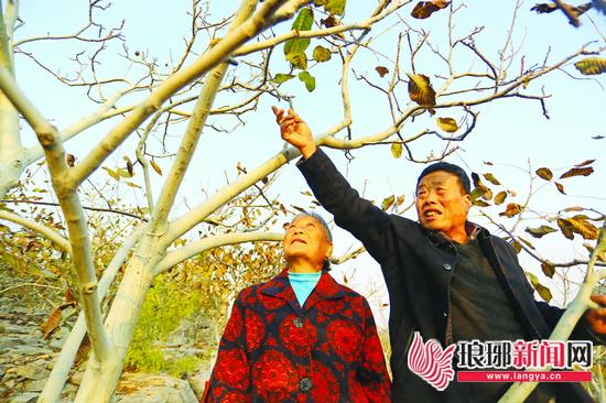 临沂改革开放40周年|金婚夫妇土地里种出红火日子