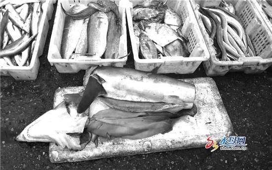 鲨鱼切块当街售卖 部门:目前仅姥鲨和噬人鲨受保护