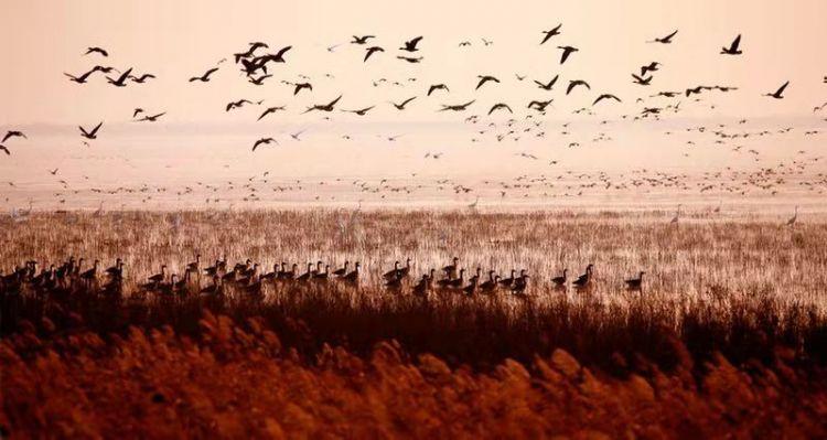 打造黄河入海文化旅游目的地 东营吹响高质量发展号角